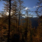 SEPTEMBER IS THE MONTH OF THE GOLDEN LARCHES AT PARADISE
