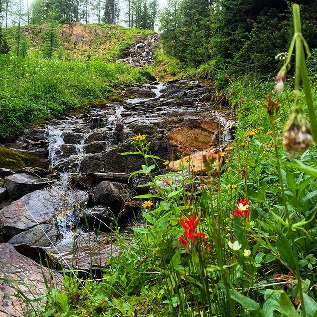 #Wildflowers and #waterfalls #ATVtour #banff #canadianrockies #invermere #panoramabc