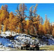 The Larches are at their peak colour tight now. A …