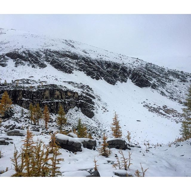 Rock, snow and #Larches. First day of fall at Paradise …