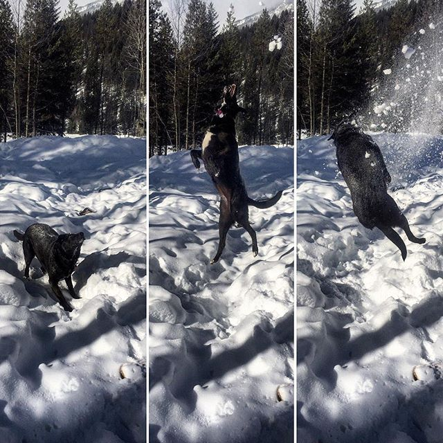 Avy loves #snow!
