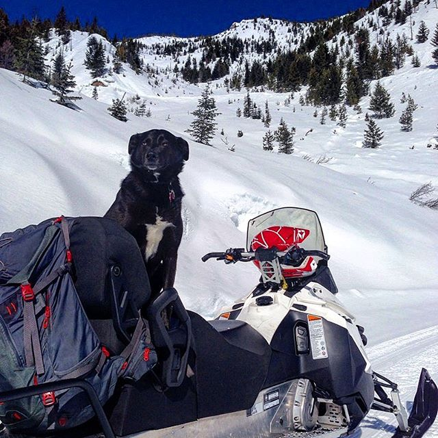 #GuideDog Avy accompanied the full day tour to Paradise today!