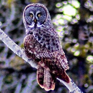 Check out our wide-eyed #spring visitor 😳😊 #owl #owls #wildlife …
