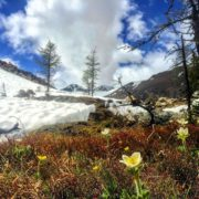 Within days of the snow melting off the ground at …