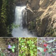 The falls were roaring and the trail is lined with …