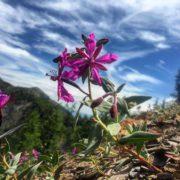 #Alpine #wildflowers #ParadiseRidge #ATVtours #tobycreekadventures #canadianrockies #panoramabc #purecanada