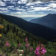 """Just another day at the """"office"""" #ATVtour #panoramabc #purecanada #wildflowers …"""