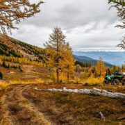 Wow!! Check out this beautiful photo of the #Larches in …