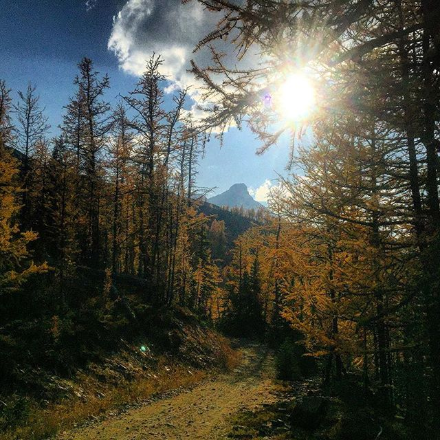At this time of year our #ATV trails are lined …