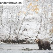 #BrandonTBrown is a professional wildlife photographer in the #CanadianRockies. Brandon's …