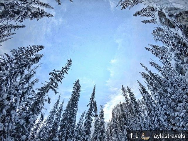 Repost from @laylastravels  It's white! It's white everywhere! . . . . . . #paradisemines #bc #britishcolombia  #aroundtheworld #bcisbeautiful #bcparks #explorecanada #insidecanada #explorebc #canada #canadasworld #naturelovers #travelphotography #travelgram #instatravel #travel #traveler #travellife #bcphotography #solotraveler #backpacking #wintermagazine #canadawonderful #imagesofcanada #beautifuldestinations #canadaparadise #paradisecanada #mycanadianphotos #goprohero5 #goproshot
