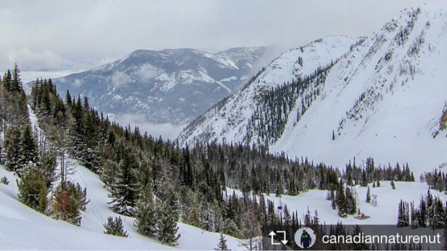 Repost from @canadiannaturenut  The view from 8000 feet. Much …
