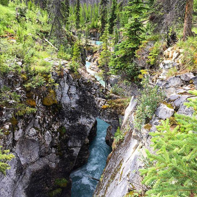 Traveling through #KootenayNationalPark? Check out #MarbleCanyon on the way.  …