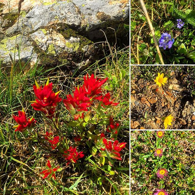 It's #AlpineFlower season. #ATVtour #panoramabc #canmore #banff #canadianrockies