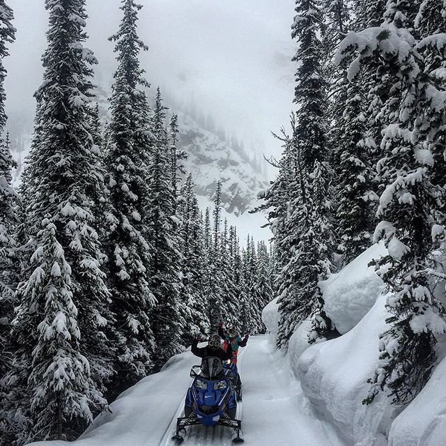 Fresh tracks in a #winter wonderland on the trail to …