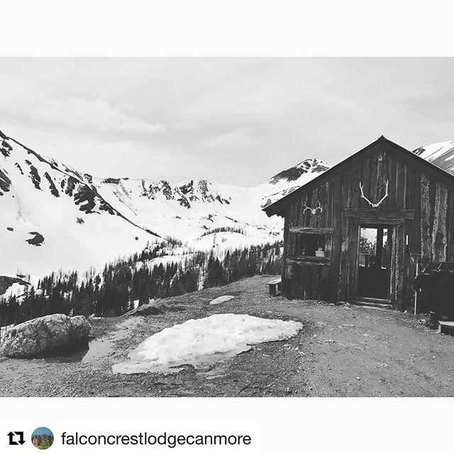 #Repost @falconcrestlodgecanmore ・・・ Get out, get wild, get exploring. Nicolle(@nikkidreier1) …