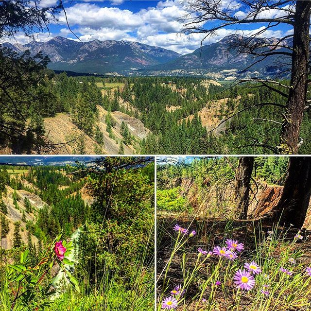 #ColumbiaValley #EcoTours #Invermere #radiumhotsprings