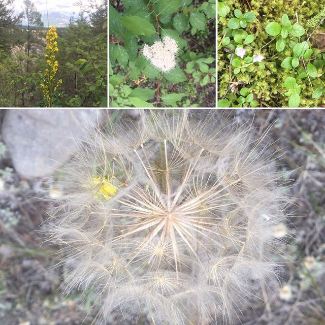 More #wildflowers! #ATV and #EcoTours.