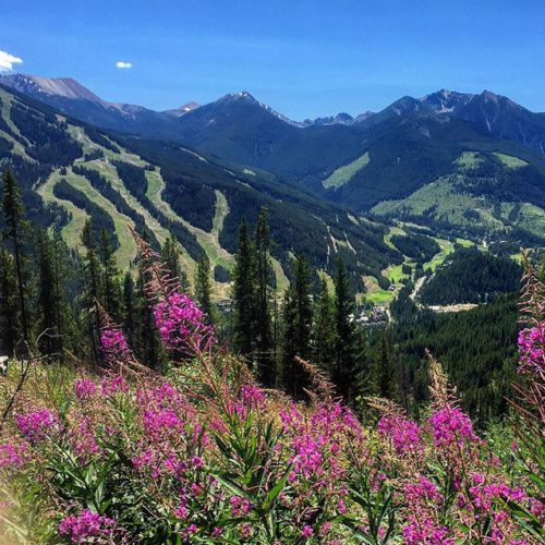#Summer in the Toby Creek valley. #ATVtours #tobycreekadventures #panoramabc #purecanada