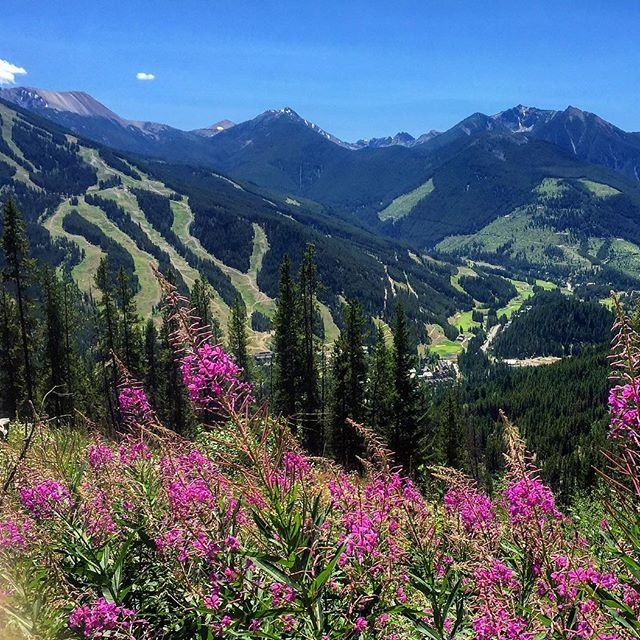 #Summer in the Toby Creek valley. #ATVtours #tobycreekadventures #panoramabc #purecanada