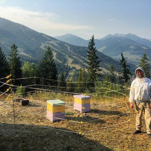 Last week we received the first two bee colonies to …