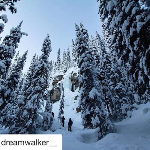REPOST: @__dreamwalker__ ・・・ feeling small between the trees and the …