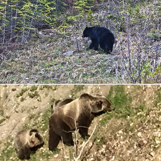 The #Bears are out soaking up the sun this weekend!! #tobycreekadventures