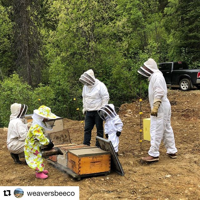 #Repost from @weaversbeeco ・・・ It was a family affair today getting the ladies set up for foraging with Scott Barsby of Toby Creek Adventures  #weaversbeeco #tobycreekadventures #beekeeping #canadianrockies #wildflowers #alpinehoney #kidsandbees #beekeepingwithtoddlers #queenbee #threekids #invermerefarmersmarket #radiummarket #fairmont #beetours #tobybees
