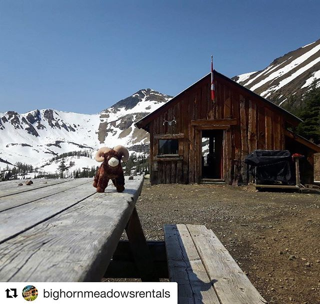 #Repost from @bighornmeadowsrentals ・・・ Last week our team got the …