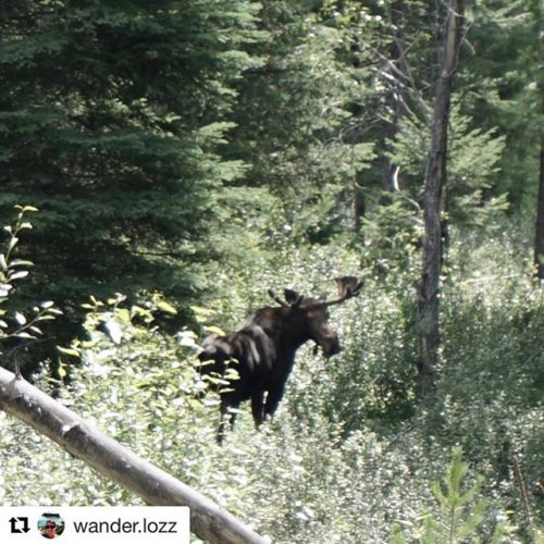 #Repost from @wander.lozz ・・・ Thanks to Toby Creek Adventures for …