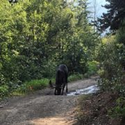 Trailside refreshments !! #moose #tobycreekadventures