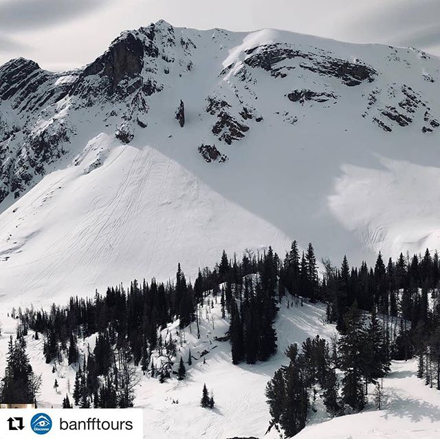 "#Repost from @banfftours ・・・ ""Snowmobiling up to 8000 ft in …"