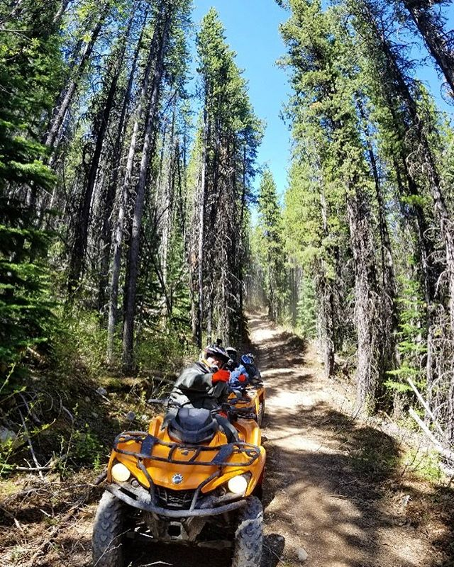 Our trail climbs gently through dense forest with scenic viewpoints …