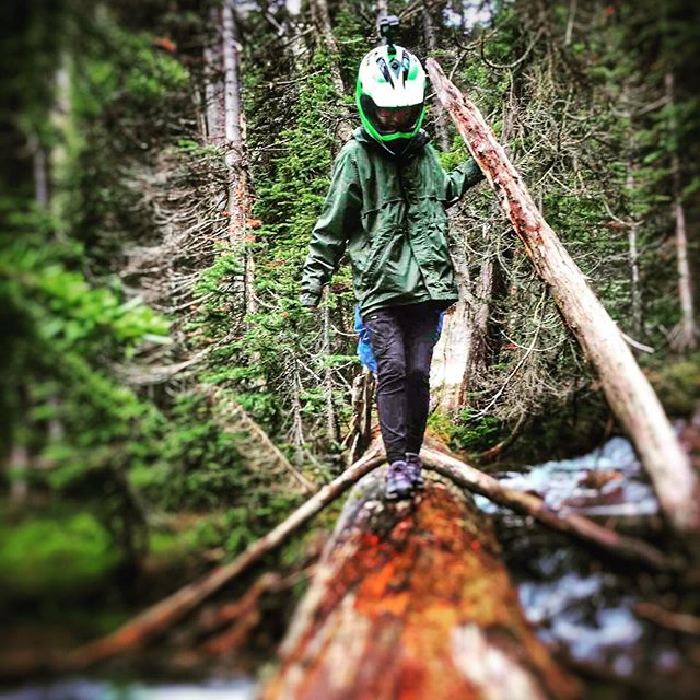 This fallen tree makes a perfect bridge! #tobycreekadventures